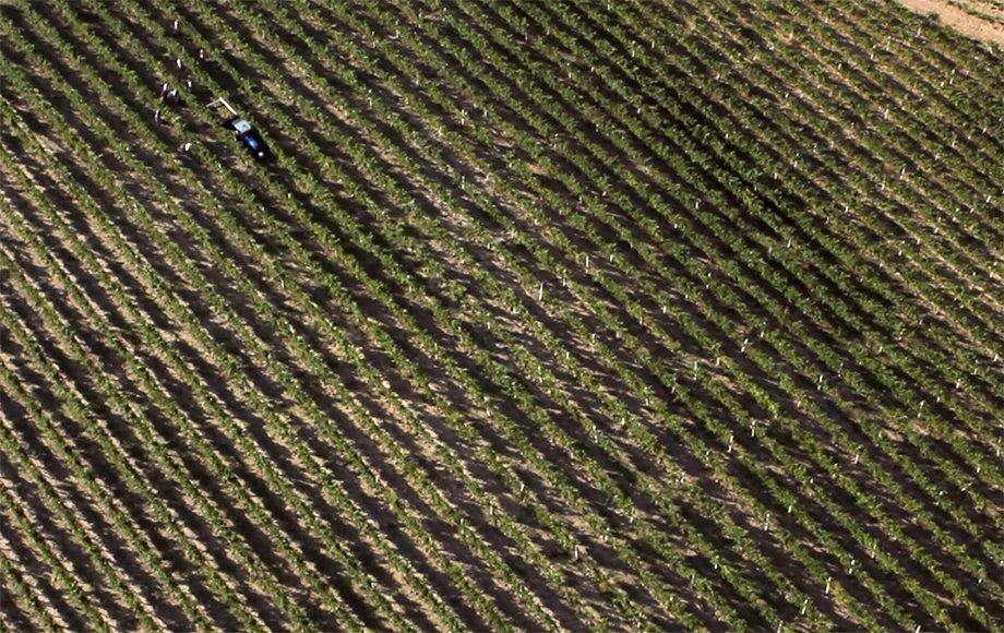 ricostruzione di una piantagione effetuata con droni professionali